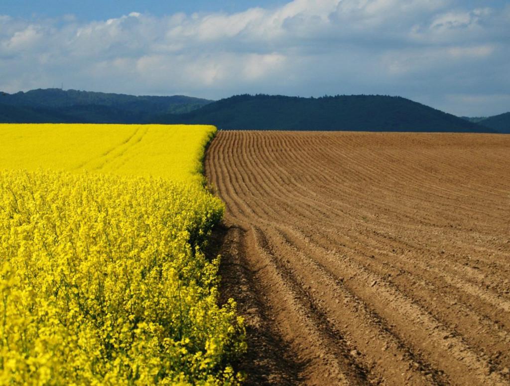 Виды использования земель как правильно использовать ресурс