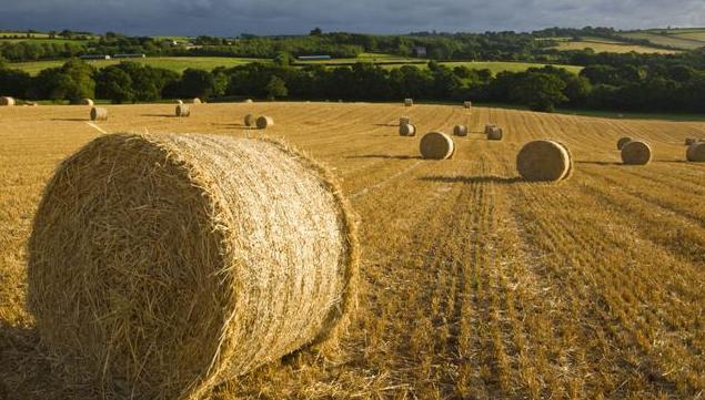 Участки земли в испании под сельское хозяйство