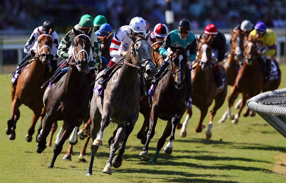 Скачки на лошадях выбор лошади